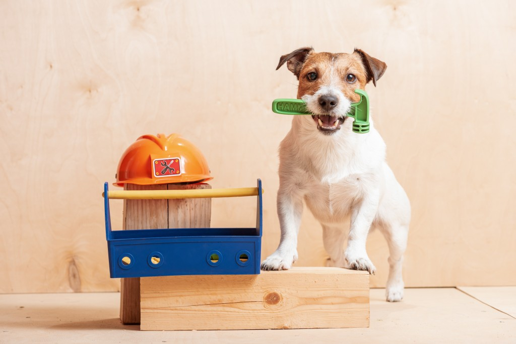 dog playing holding hammer